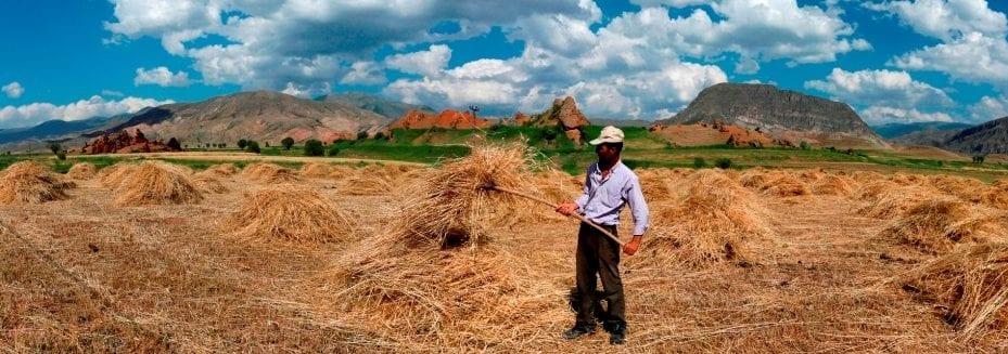 Türkiyenin Buğday Haritası çıkarıldı Yeşil Haber